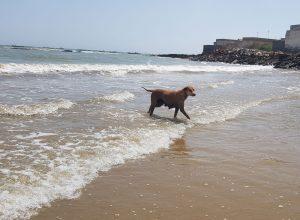 سگ ولگرد در ساحل ماسهای